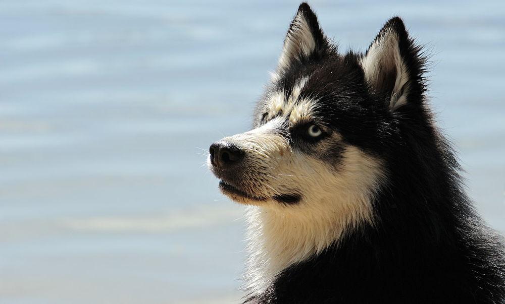 cane con pelo bagnato